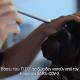Τα ζώα και ο SARS-Cov2 - Εθελοντική Δράση Κτηνιάτρων Ελλάδας 6