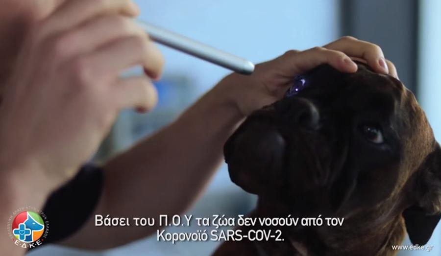 Τα ζώα και ο SARS-Cov2 - Εθελοντική Δράση Κτηνιάτρων Ελλάδας 4
