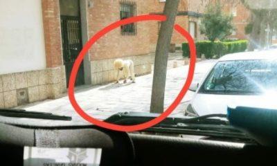 Απίθανο: Άνδρας «έσπασε» την καραντίνα και ντύθηκε σκύλος για να πάει βόλτα 18