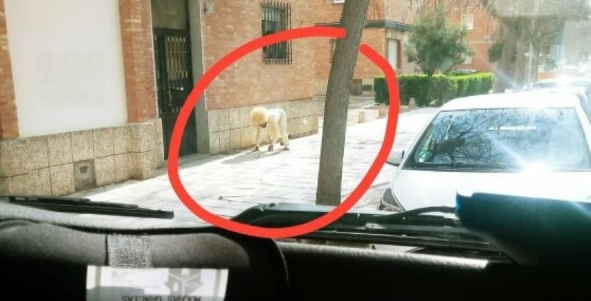 Απίθανο: Άνδρας «έσπασε» την καραντίνα και ντύθηκε σκύλος για να πάει βόλτα 5