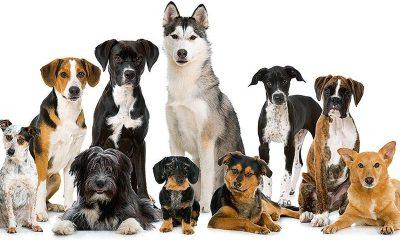 Προικισμένα σκυλιά από τη... διασταύρωση 13