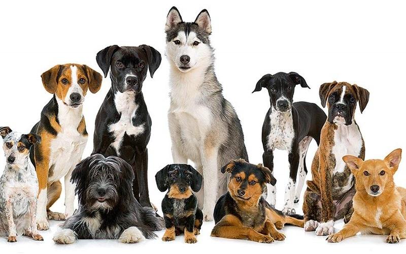 Προικισμένα σκυλιά από τη... διασταύρωση 1