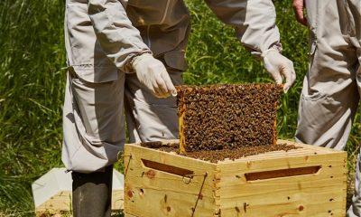 Προγράμματα μελισσοκομίας 2020 – Ποιοι έχουν δικαίωμα συμμετοχής 5