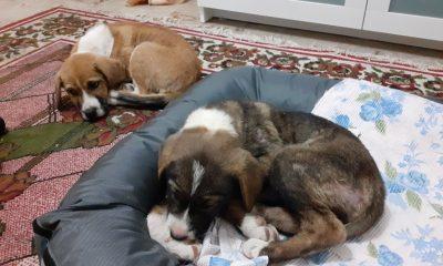 Εγκαταλειμμένα σκυλάκια στην Καλαμάτα αναζητούν οικογένεια 16