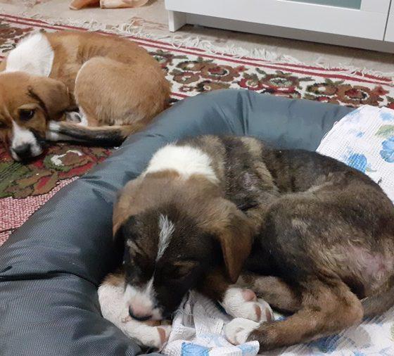 Εγκαταλειμμένα σκυλάκια στην Καλαμάτα αναζητούν οικογένεια 2