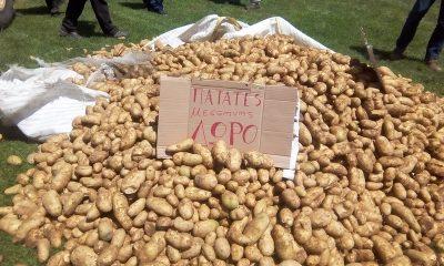 Οι πατατοπαραγωγοί διαμαρτύρονται και οργανώνουν διανομή δωρεάν πατάτας στη Μεσσήνη 3