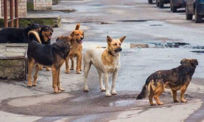 Ο ηθοποιός Γιώργος Καραμίχος για την Παγκόσμια Ημέρα Αδέσποτων Ζώων 7