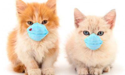 Τσιόδρας: Ευάλωτες στον κορωνοϊό οι γάτες - Χαμηλότερη η πιθανότητα των σκύλων 9