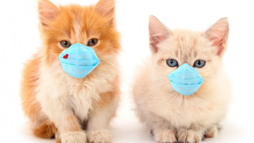 Τσιόδρας: Ευάλωτες στον κορωνοϊό οι γάτες - Χαμηλότερη η πιθανότητα των σκύλων 3