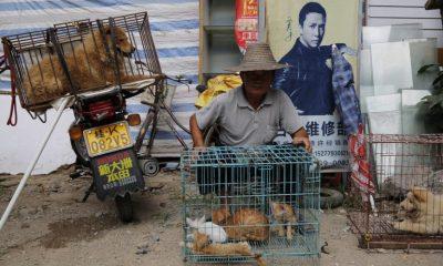 Κινεζική πόλη απαγορεύει με «ιστορική απόφαση» την κατανάλωση γατιών και σκύλων 6