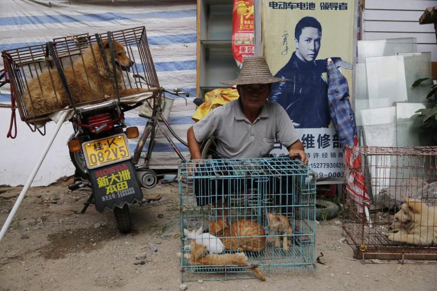 Κινεζική πόλη απαγορεύει με «ιστορική απόφαση» την κατανάλωση γατιών και σκύλων 12