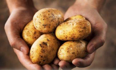 Επιστολή Αθανασόπουλου σε Άδωνι Γεωργιάδη και Βορίδη για την τιμή της πατάτας 5