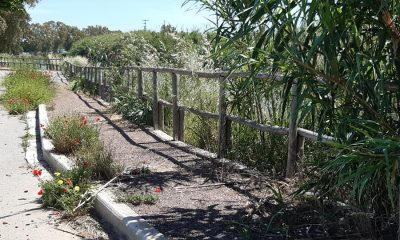 Γιάννης Χριστόπουλος: Αποπαίδι για τον Δήμο Καλαμάτας η Δυτική Παραλία 14
