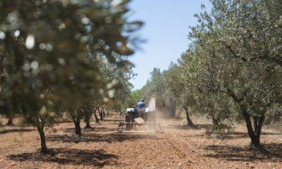 Αγροτοκτηνοτροφικός σύλλογος Μεσσήνης: Οι αγρότες καταστρεφόμαστε 1