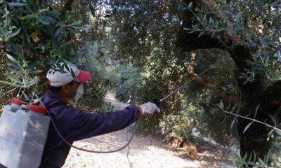 ΔΑΟΚ Τριφυλίας: Πρόσληψη εργατών στο πρόγραμμα Δακοκτονίας 2020 12