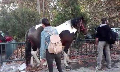 Ακολουθώντας τις οδηγίες Αυγενάκη: Βγήκε βόλτα με το… άλογο του στον ποδηλατόδρομο! 4