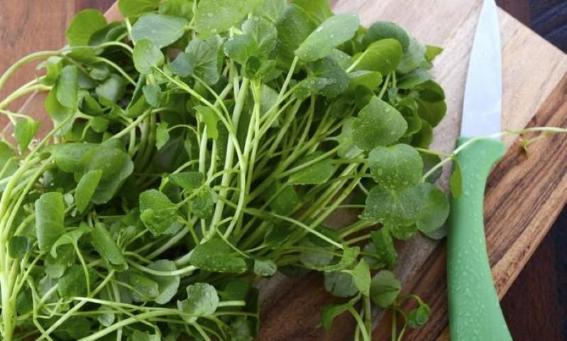 """Το """"θαυματουργό"""" λαχανικό που ρίχνει πίεση και χοληστερίνη και προστατεύει από τον καρκίνο 5"""