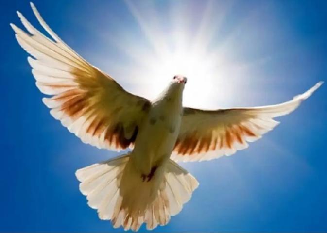 Ευχές του Παναγιώτη Νίκα για το τριήμερο του Αγίου Πνεύματος 14