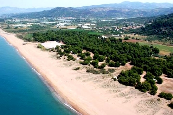 Παραλία Ελαίας