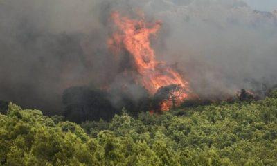 Πυρκαγιά στην Οιχαλία Μεσσηνίας 4