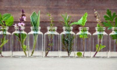 Αυτά είναι τα βότανα που καταπολεμούν άγχος και στρες 8