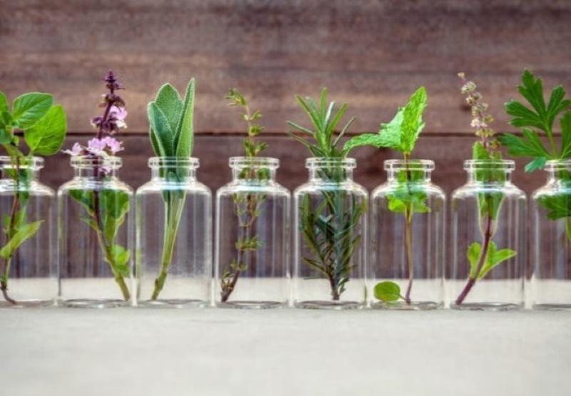 Αυτά είναι τα βότανα που καταπολεμούν άγχος και στρες 1