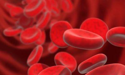 Έρευνα: Η μετάγγιση αίματος από νέους ανθρώπους βοηθά στην καταπολέμηση της γήρανσης 3
