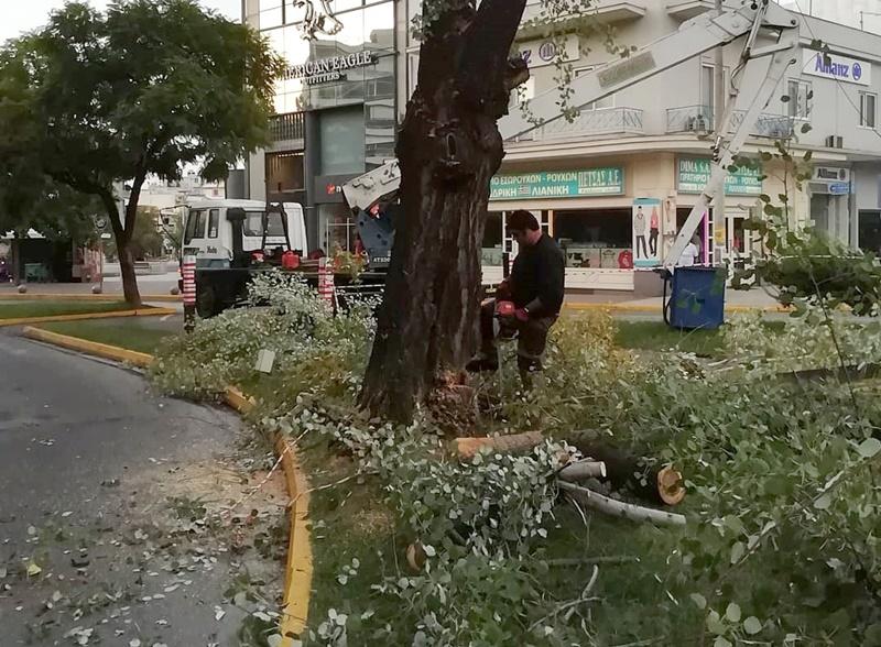 Συνεργείο του Δήμου Καλαμάτας έκοψε λεύκα στο κέντρο της πόλης 3