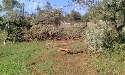 Καταγραφή ζημιών από τον ανεμοστρόβιλο που έπληξε τις περιοχές Πύλου, Μεσσήνης και Τριφυλίας 8