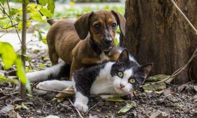 Κορονοϊός: Οι γάτες μεταδίδουν μεταξύ τους τον ιό, ενώ οι σκύλοι όχι 5