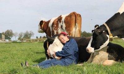 Γιατί σε ολόκληρο τον πλανήτη οι άνθρωποι άρχισαν να αγκαλιάζουν αγελάδες; 56