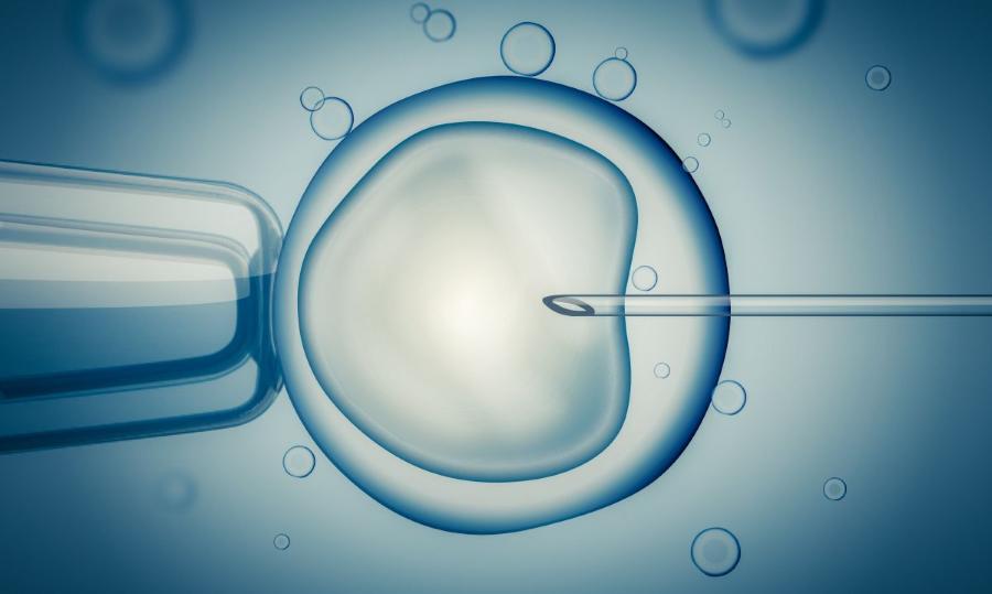Μικρογονιμοποίηση και εμβρυομεταφορά: Η εξωσωματική γονιμοποίηση βήμα βήμα 14