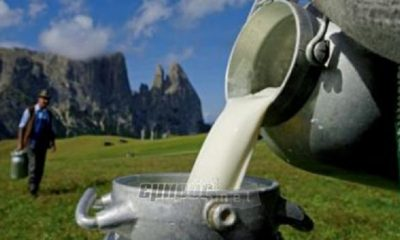 Τυροκομική Μεσσήνης: Αύξηση στις τιμές του πρόβειου και του γίδινου γάλακτος 1